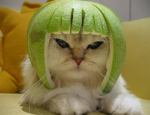 Lime cat is important  Lime Cat